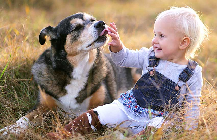 Child Playing With Shelter Dog In A Field.