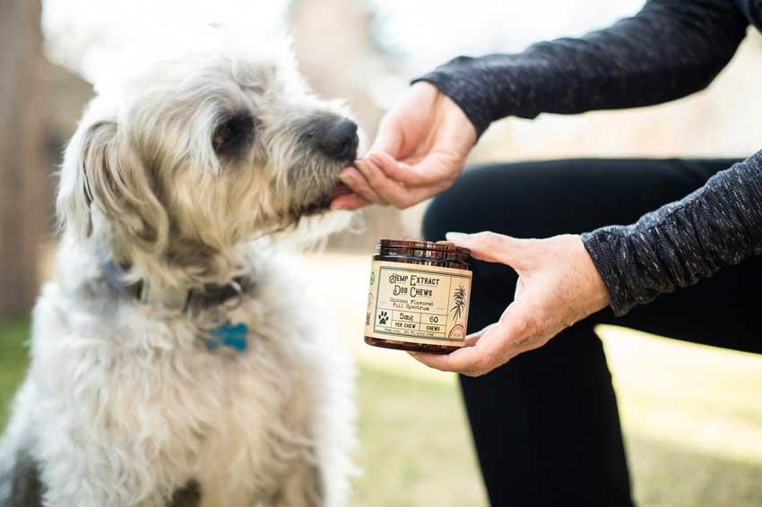 CBD Dog Treats Being Fed To A Dog.
